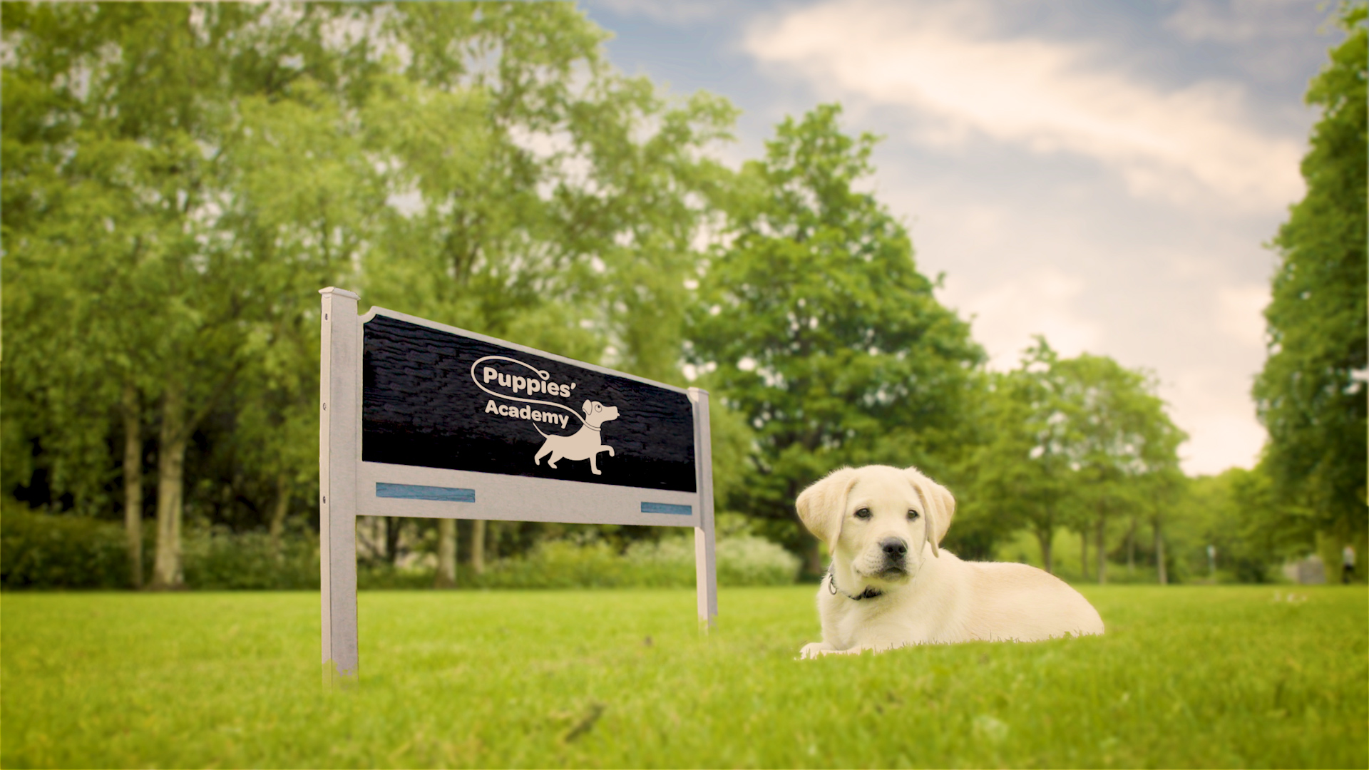 find out more about Puppies Academy campaign for Irish Guide Dogs for the Blind goes live